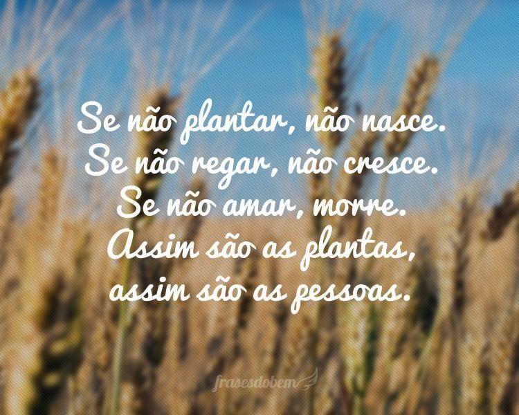 Se não plantar, não nasce. Se não regar, não cresce. Se não amar, morre. Assim são as plantas, assim são as pessoas.