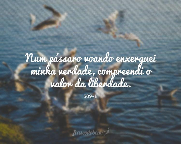 Num pássaro voando enxerguei minha verdade, compreendi o valor da liberdade.