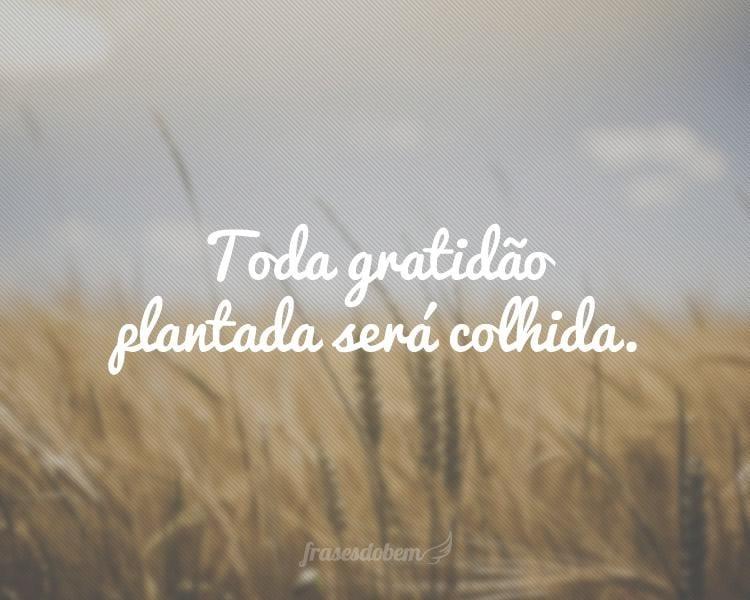 Toda gratidão plantada será colhida.