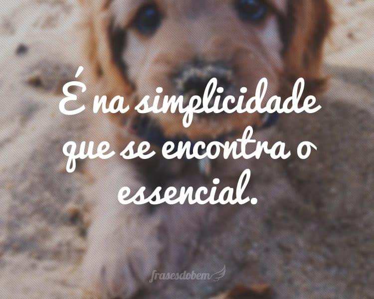 É na simplicidade que se encontra o essencial.