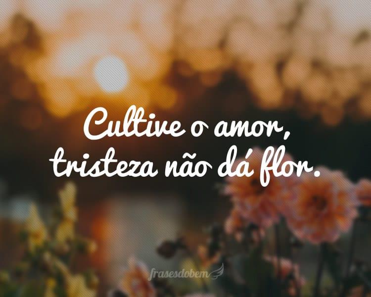 Cultive o amor, tristeza não dá flor.