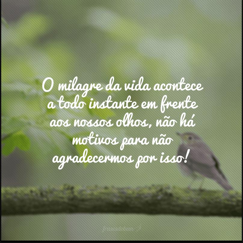 O milagre da vida acontece a todo instante em frente aos nossos olhos, não há motivos para não agradecermos por isso!