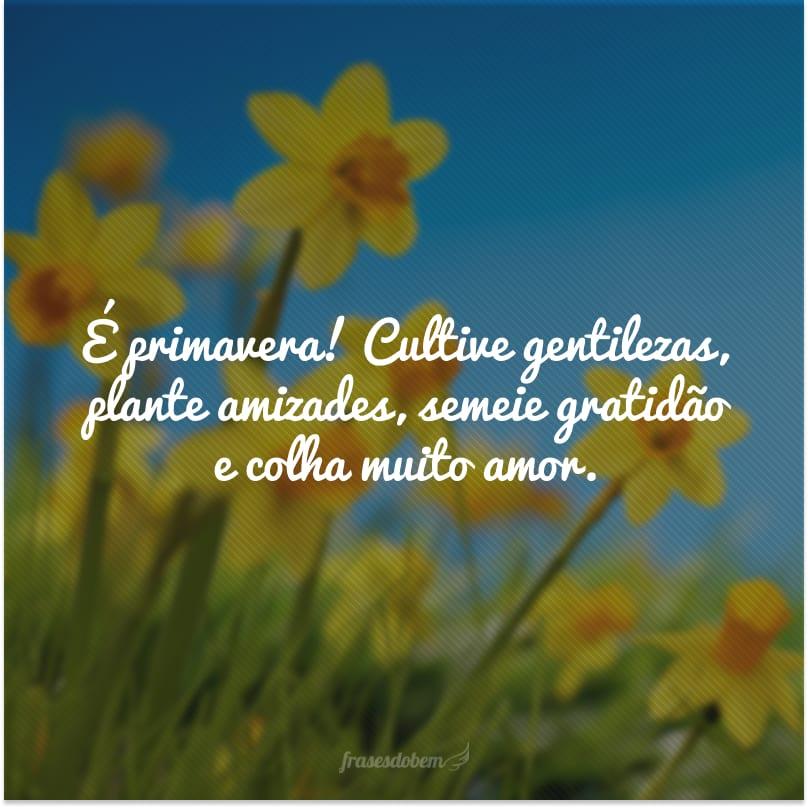 É primavera! Cultive gentilezas, plante amizades, semeie gratidão e colha muito amor.