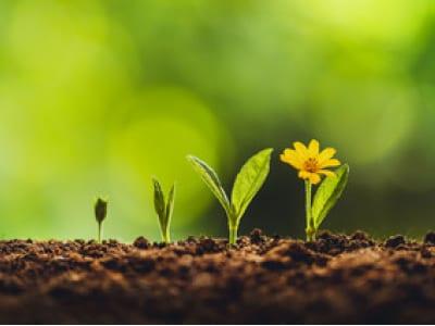 50 frases de primavera para florescer junto às flores