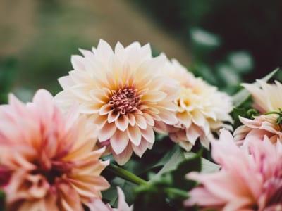 60 frases de flores que vão trazer um colorido especial para seu dia