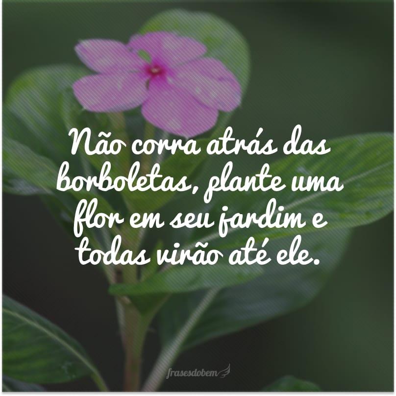 Não corra atrás das borboletas, plante uma flor em seu jardim e todas virão até ele.