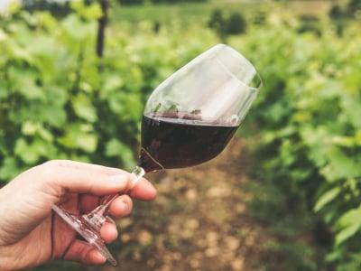 80 frases de vinho para ler enquanto você aprecia uma taça generosa