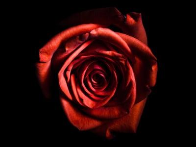 40 frases de poemas de amor para enviar à pessoa amada