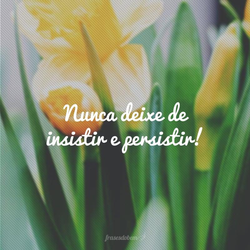 Nunca deixe de insistir e persistir!