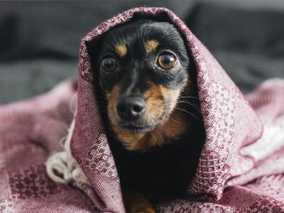 50 frases de boa noite com frio para dormir na cama quentinha