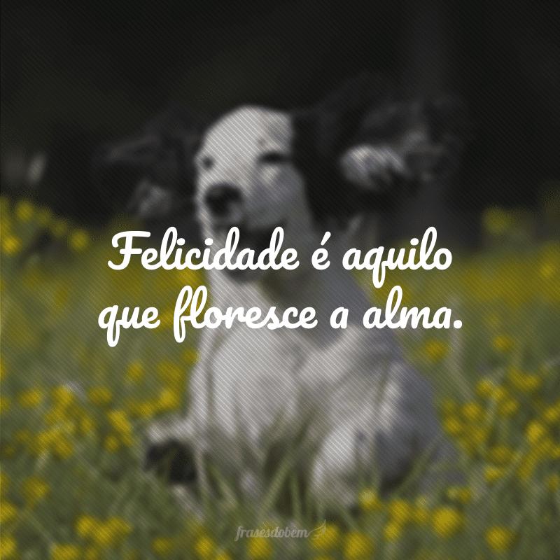 Felicidade é aquilo que floresce a alma.