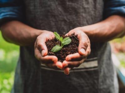 40 frases de agronomia que mostram a importância dessa profissão