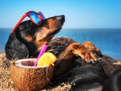 45 frases de boas férias para aproveitar os dias mais felizes do ano