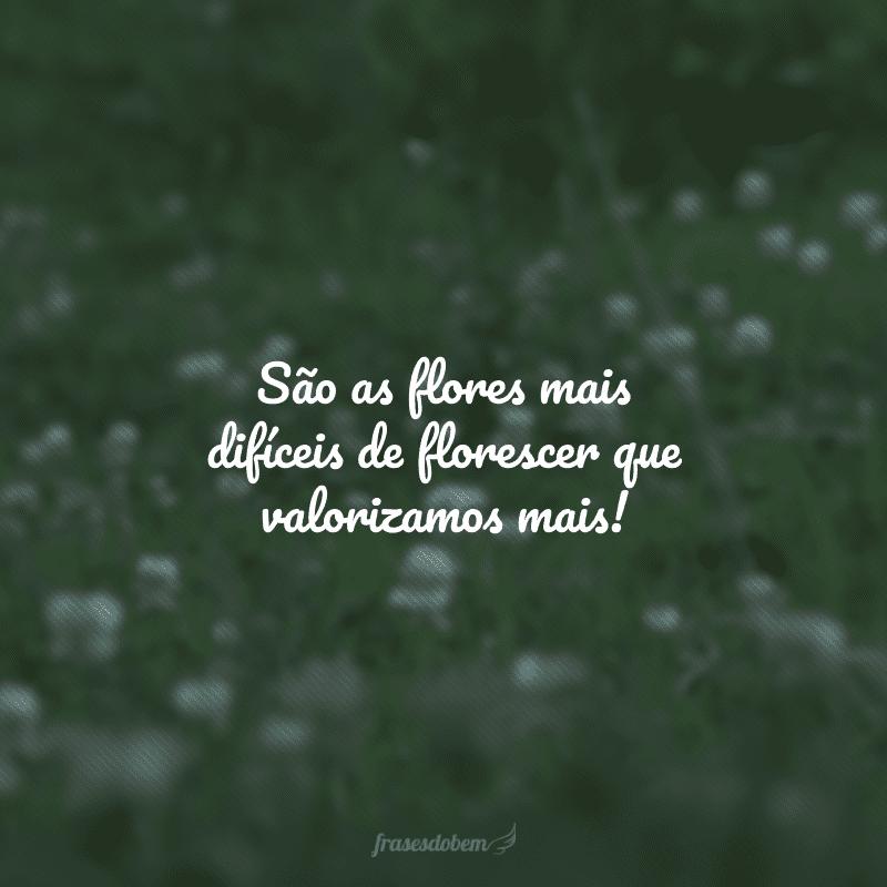 São as flores mais difíceis de florescer que valorizamos mais!
